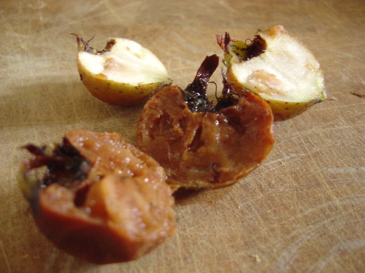 The medlar fruit is ready when soft and brown