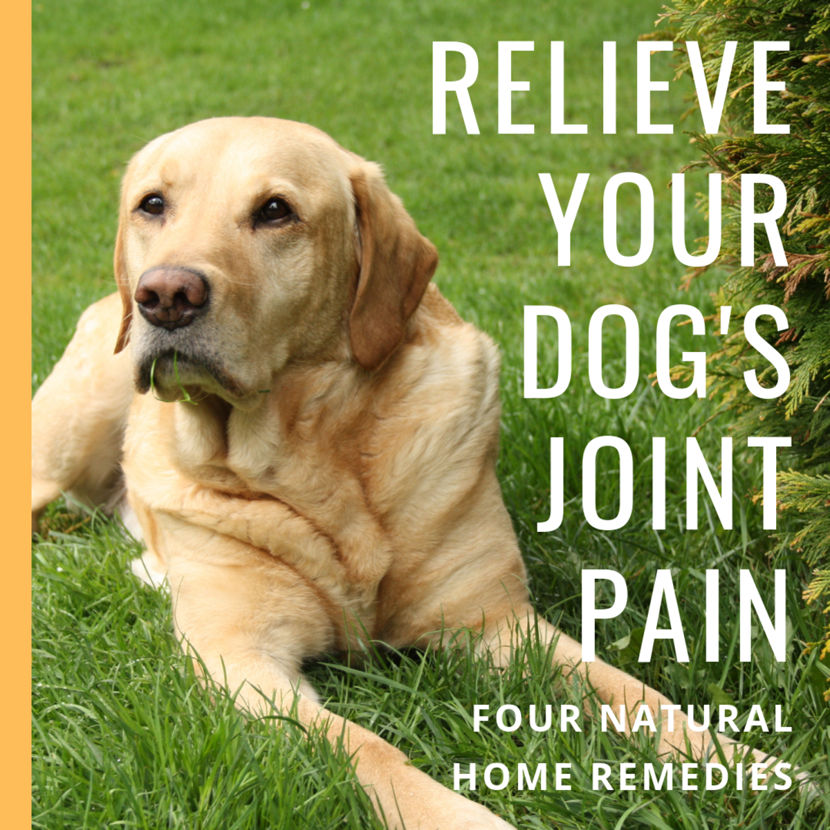 Here are four home remedies that provided relief for my dog's joint problems.