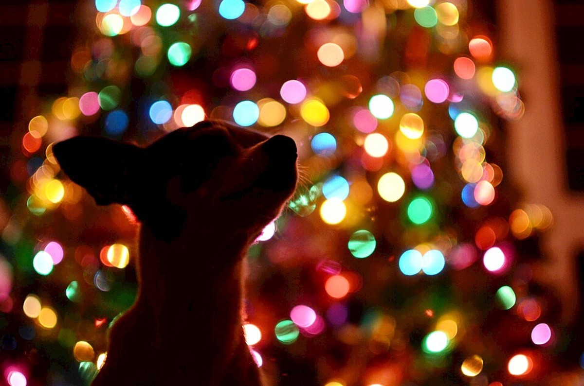 Christmas can be a fun and exciting time for dogs, but it's very important to protect them from dangers.
