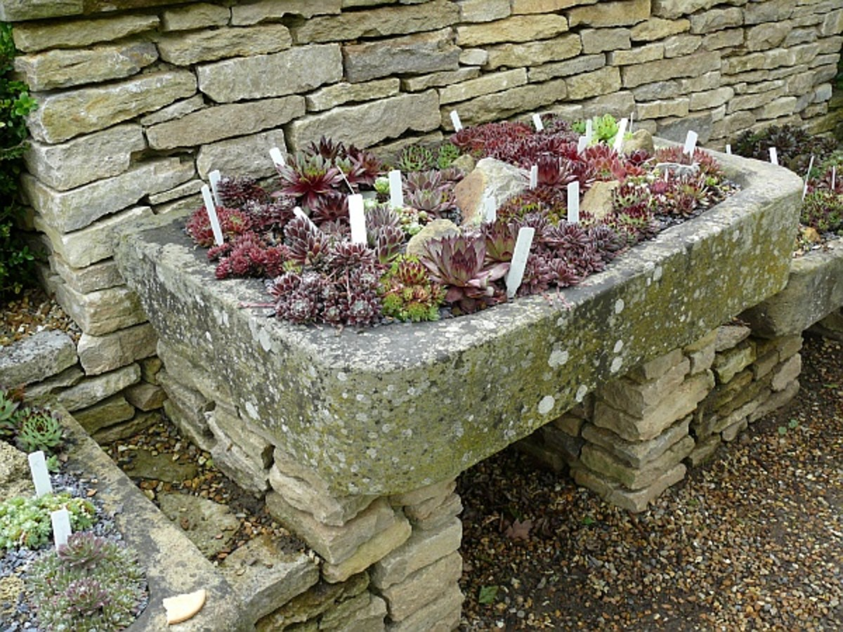 How to make a container rock garden for Big white rocks for garden