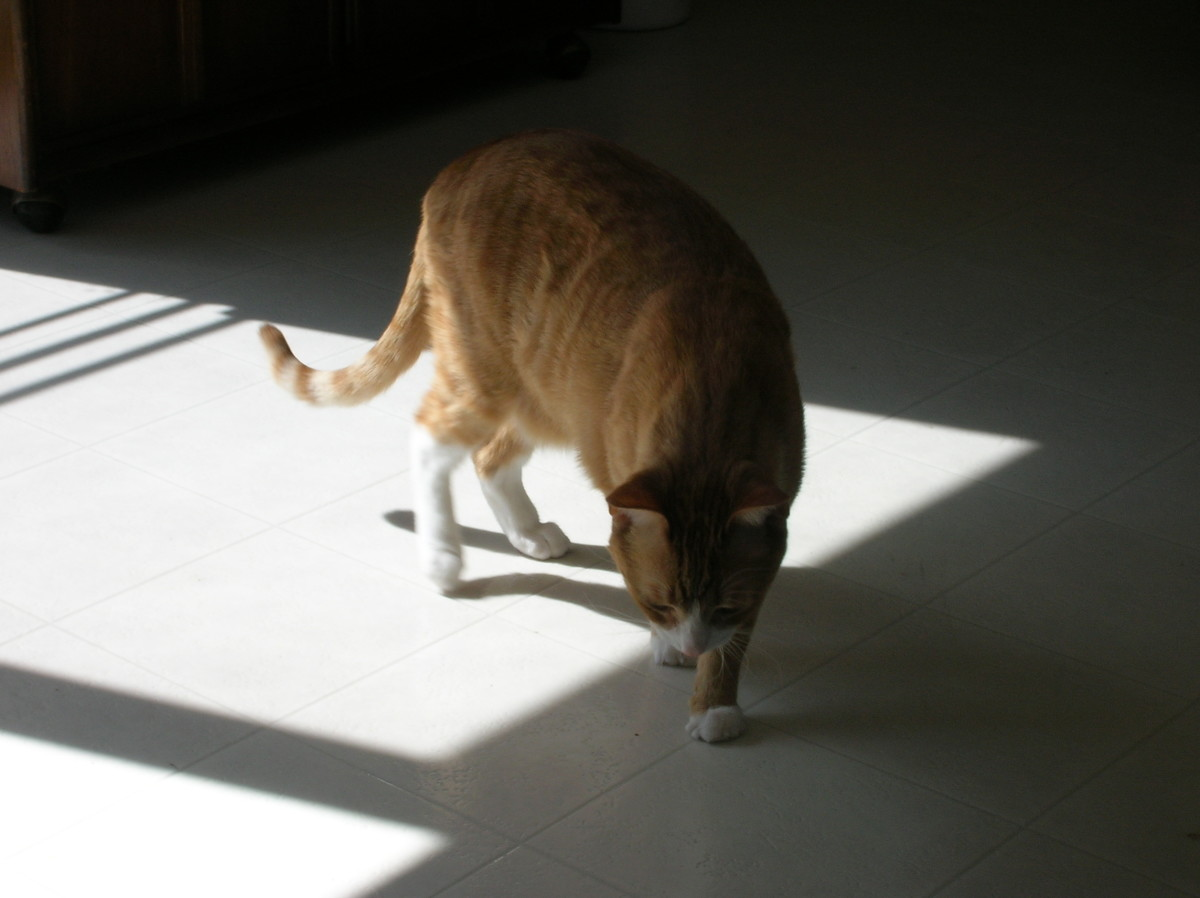 how-to-stop-a-cat-from-peeing-in-the-house