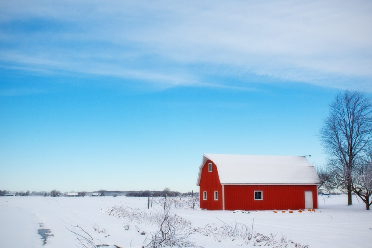 Growing During Winter: 5 Vegetables That Don't Mind a Little Snow