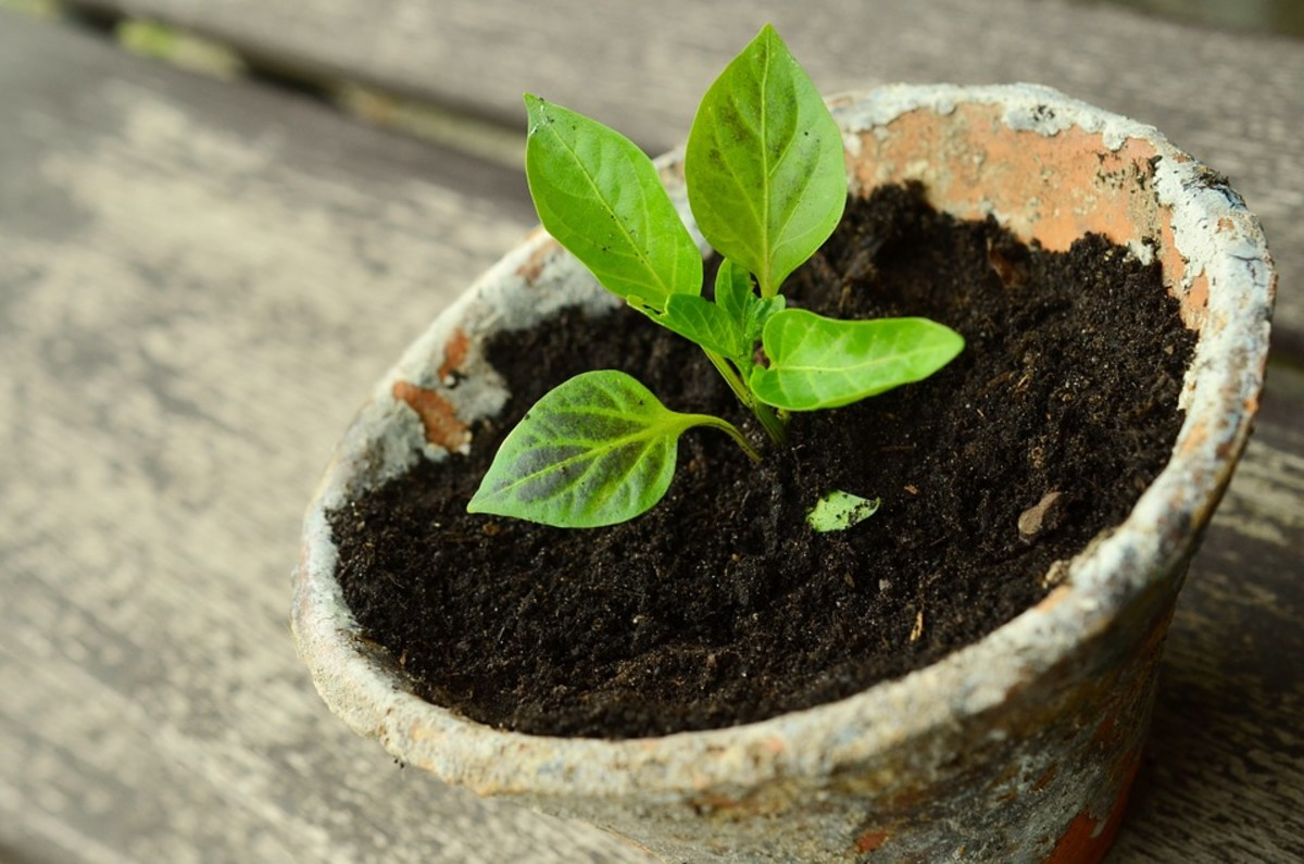 5 Ways for Your Small Homestead to Turn a Profit Quickly