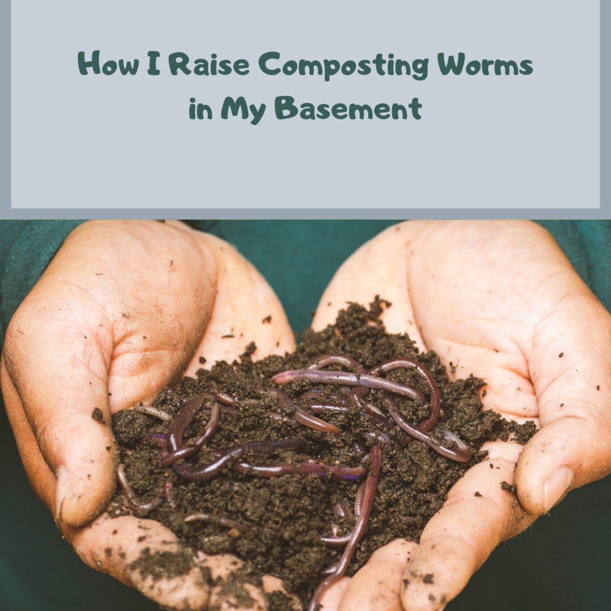 How I Raise Composting Worms in My Basement