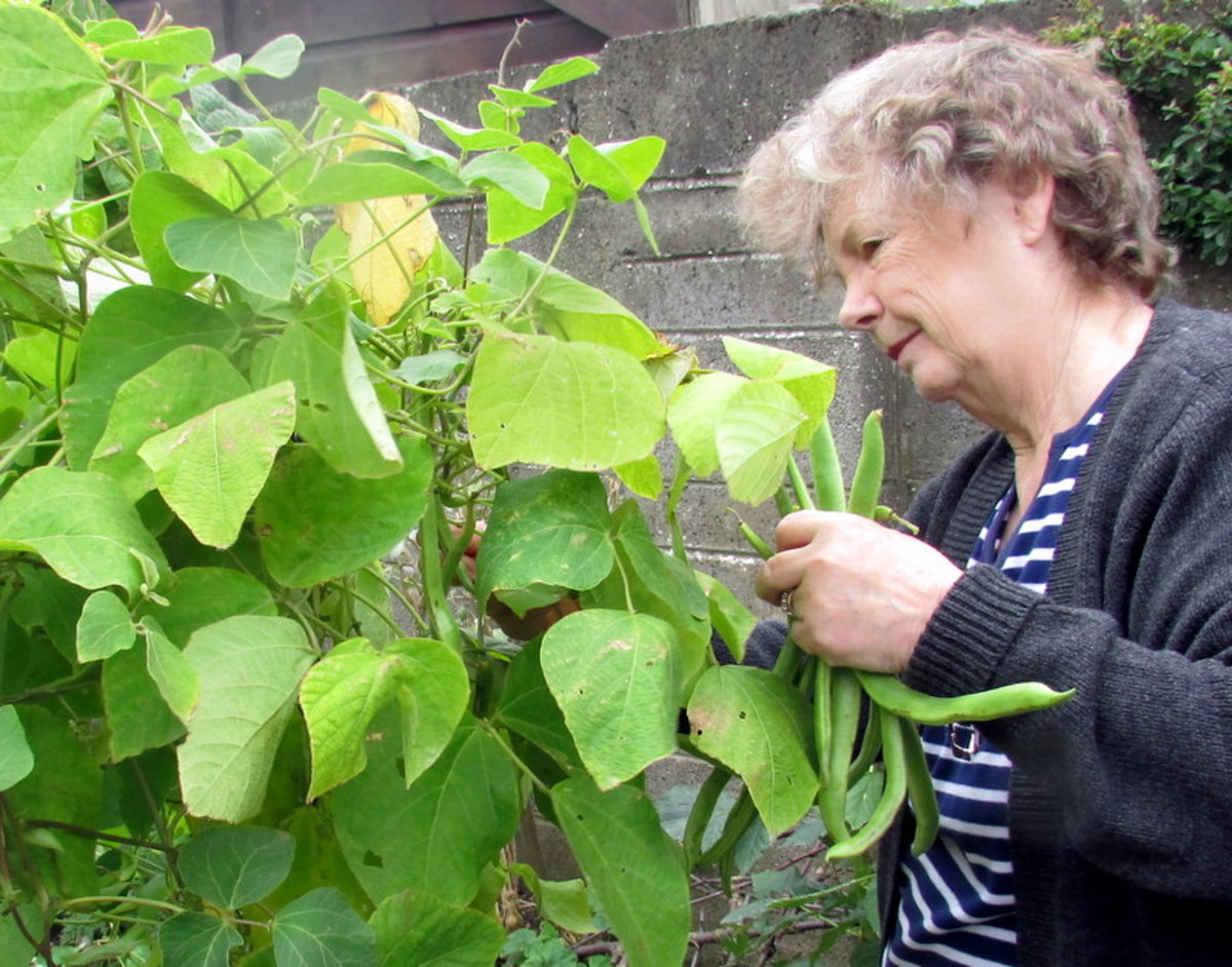 Runner Beans grow vertically and take up very little space, making them a great vegetable for small gardens.