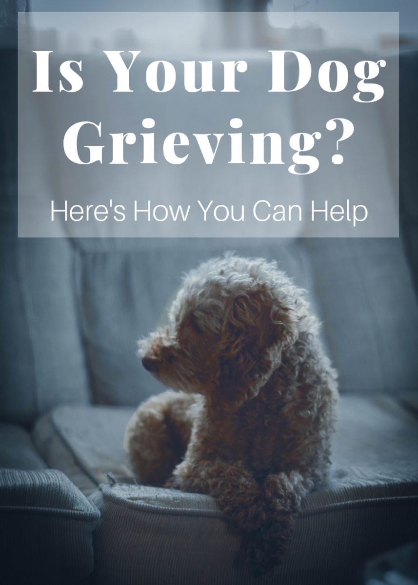 Loss is just as devastating for dogs as it is for their human counterparts. Here are a few ways to ease your four-legged friend's grief.