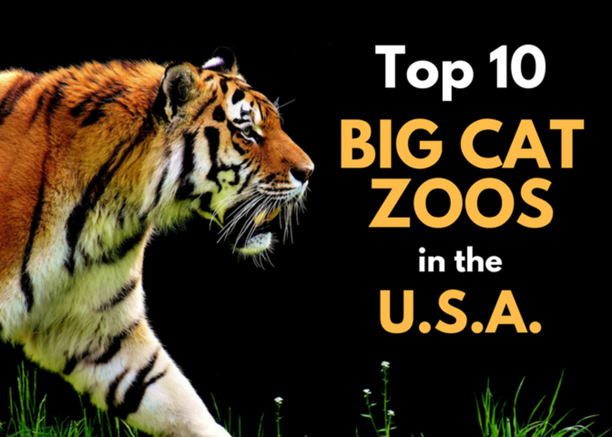 The Top 10 Big Cat Zoos in the U.S.A.