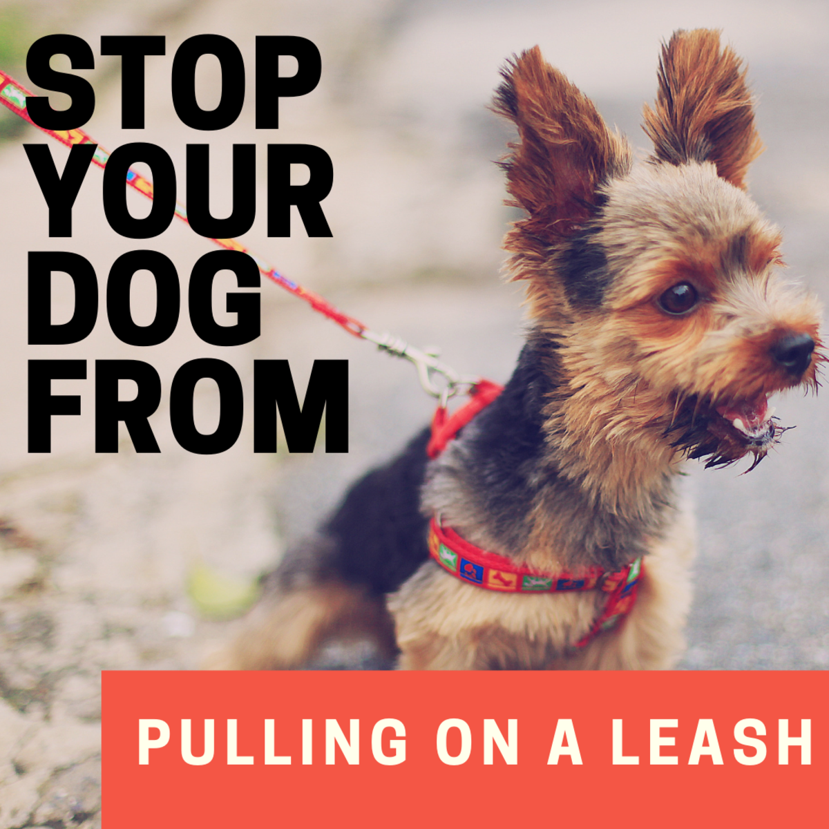 How to Stop a Dog From Pulling on the Leash