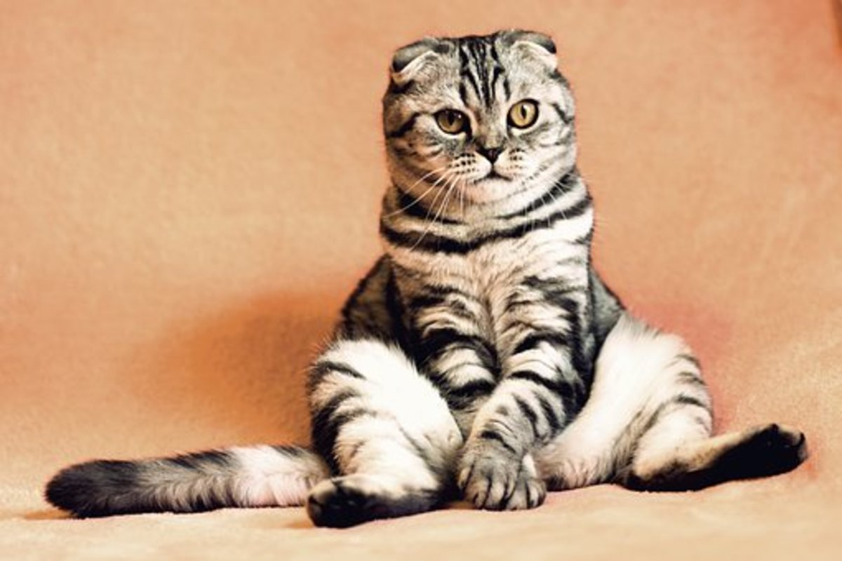 Before beginning to peruse these Cat Idioms and Phrases make sure you are sitting comfortably.