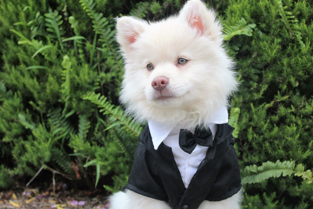 Done Up Like A Dogs Dinner - Dog Idiom