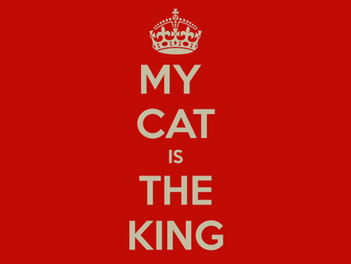If there is a single theme among most Cat Idioms and Phrases, it's that the cat believes himself king.