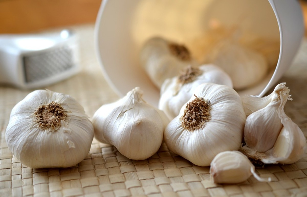 Learn how to plant, grow, and harvest garlic like a pro.