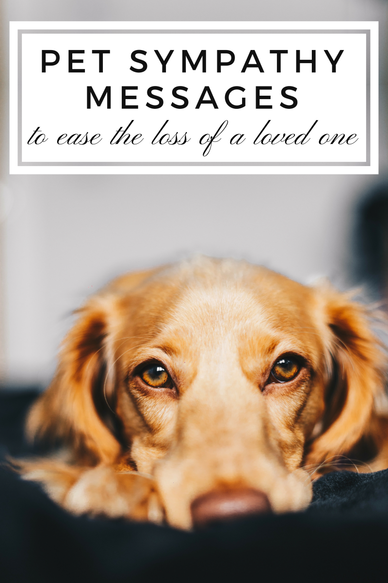 Sympathy Messages For The Loss Of A Pet