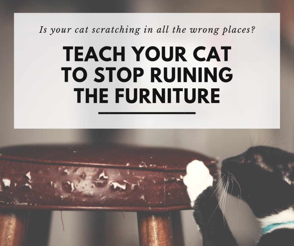 How to Stop Your Cat From Ruining the Furniture