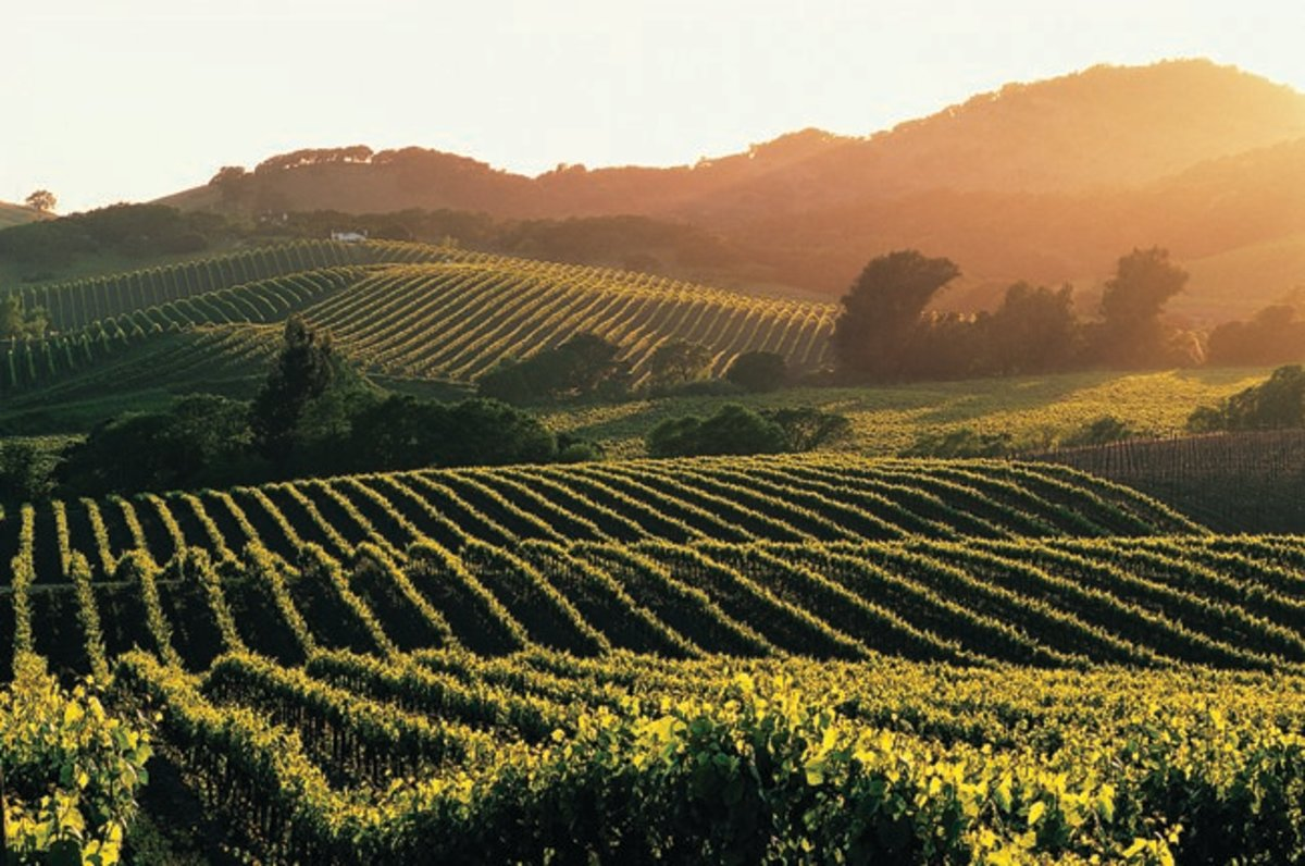 In addition to producing some of the most delicious wines in the world, Napa Valley is stunningly beautiful!