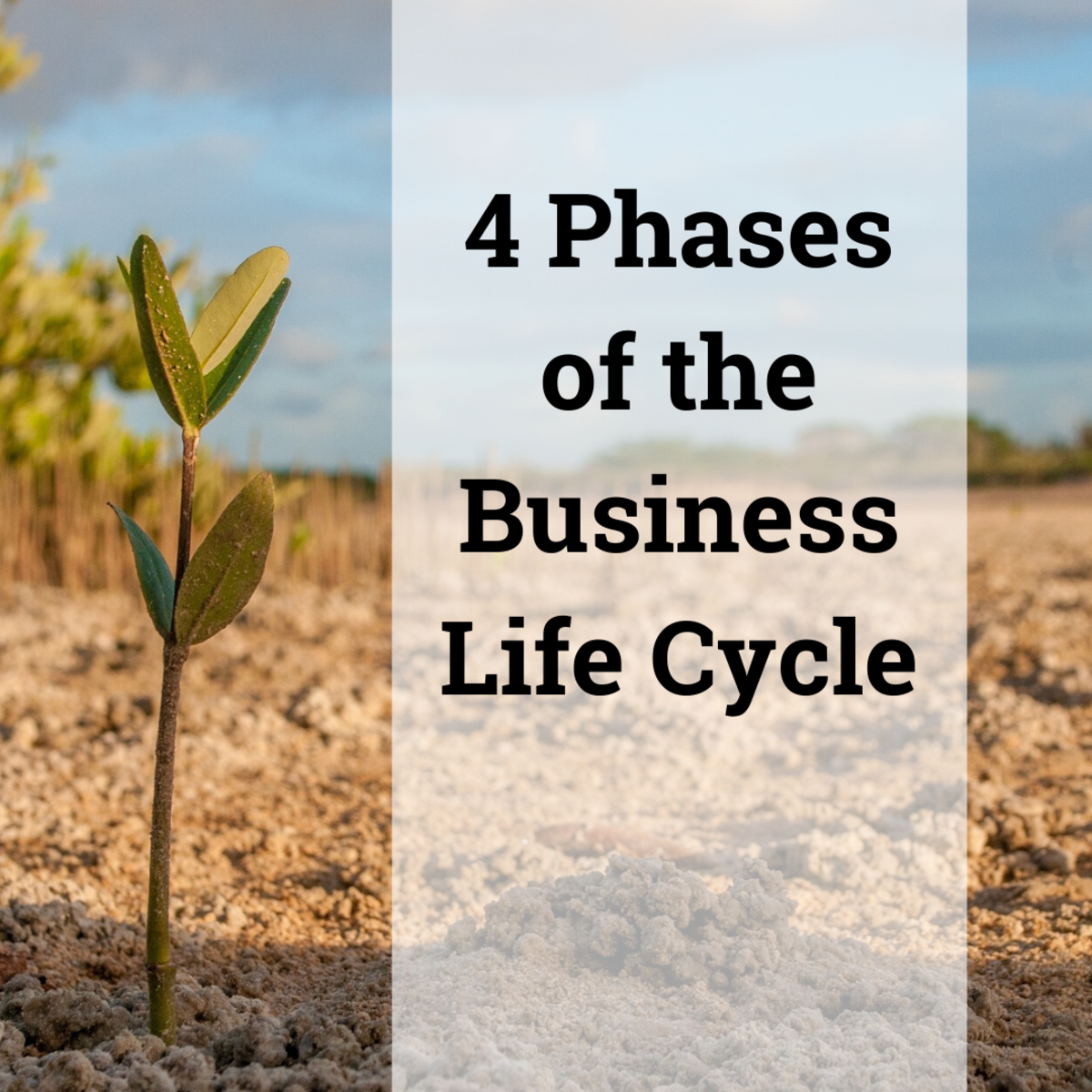 Learn more about the business life cycle: establishment, growth, maturity and post-maturity.