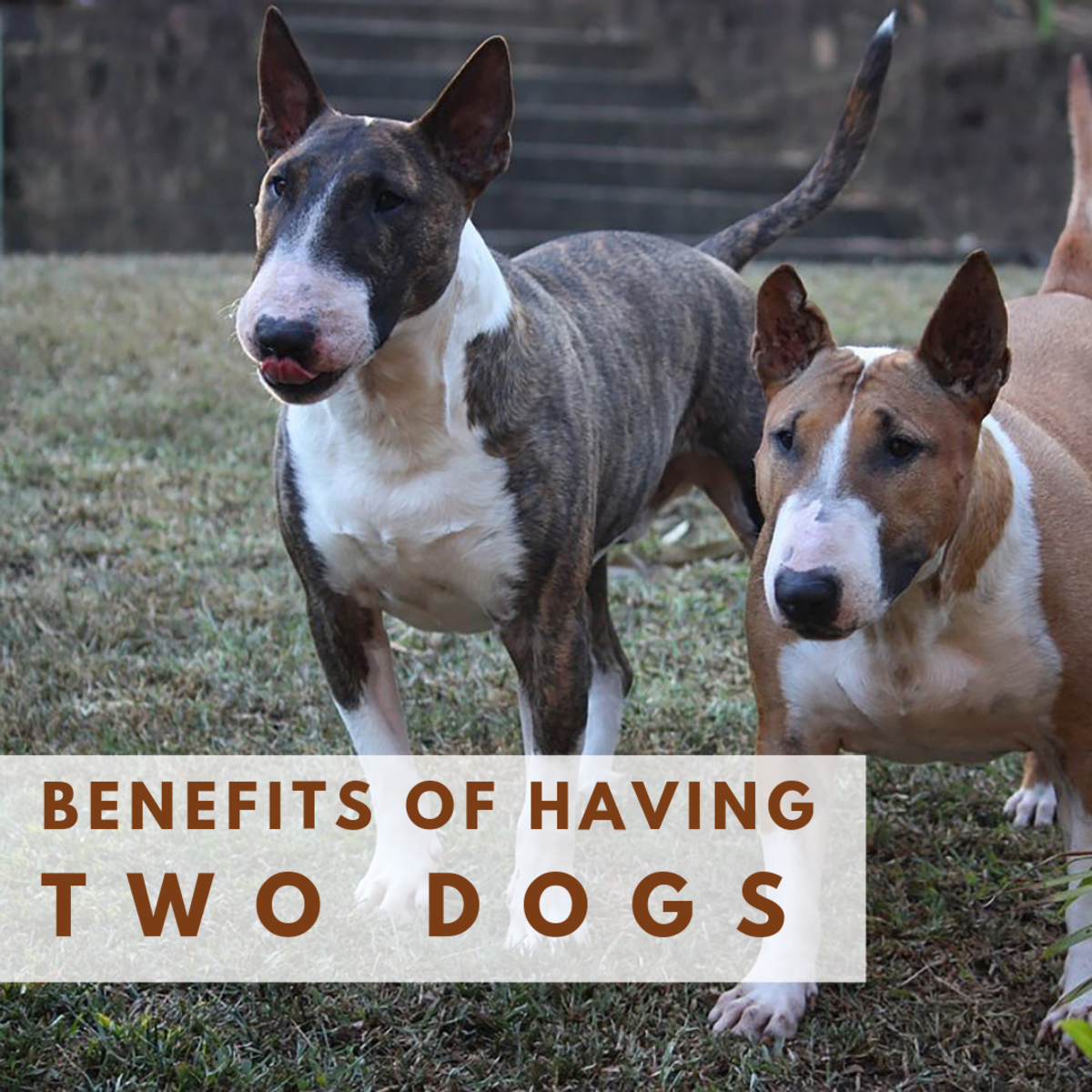 There are many benefits to having two dogs instead of just one.