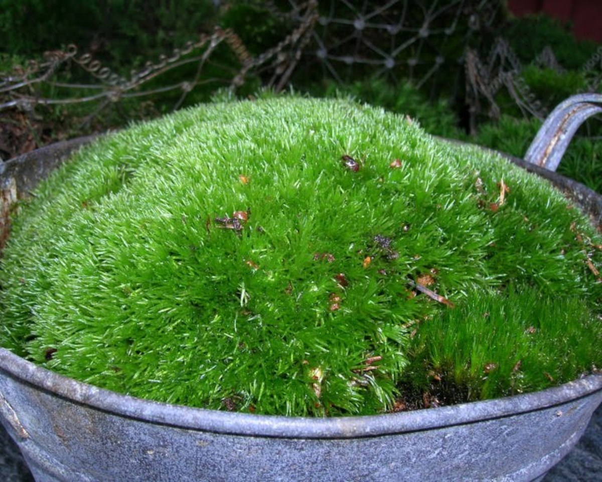 A moss garden can also consist of moss in a bowl! Very decorative and mobile!