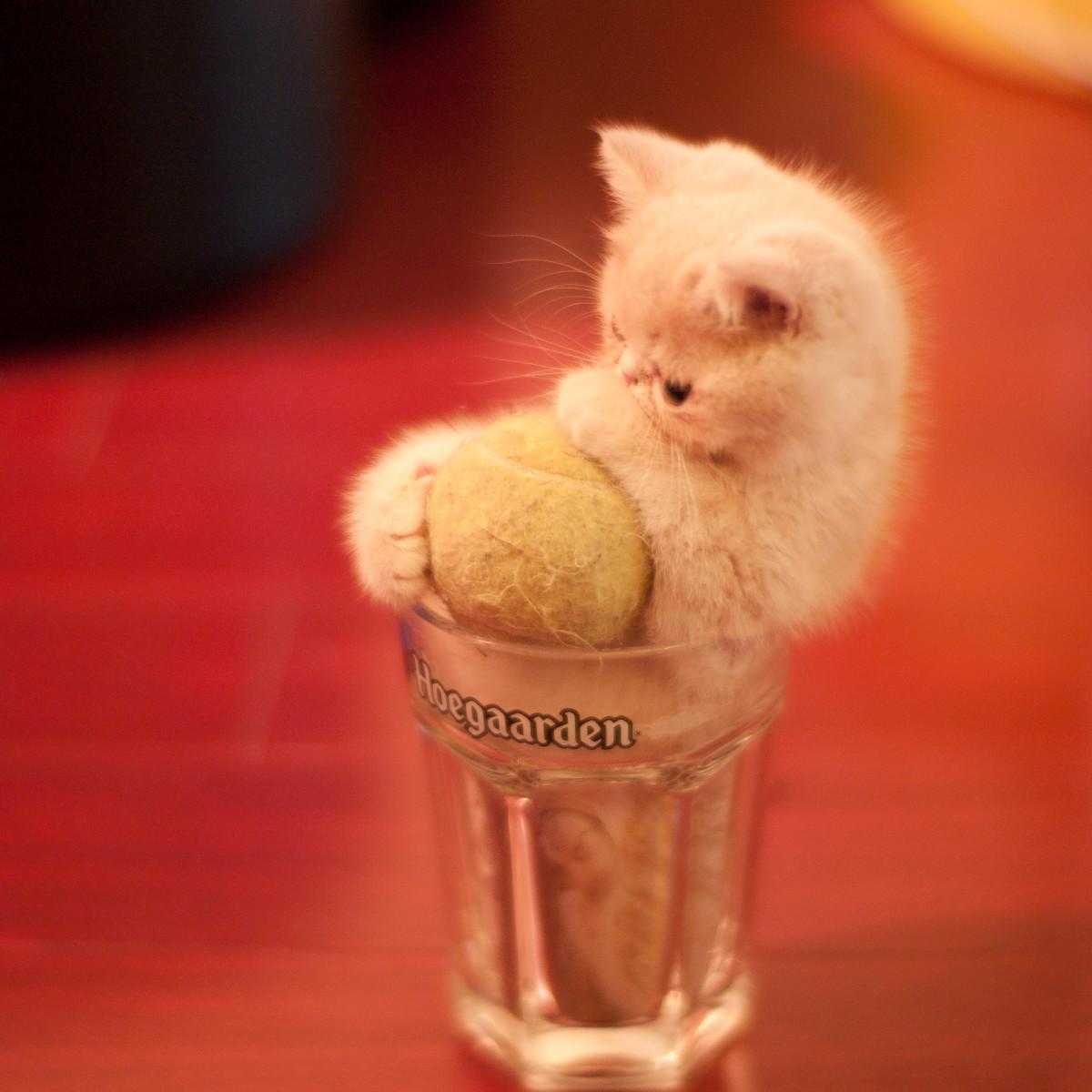 Great Internet Hoaxes: The Bonsai Kitten Prank