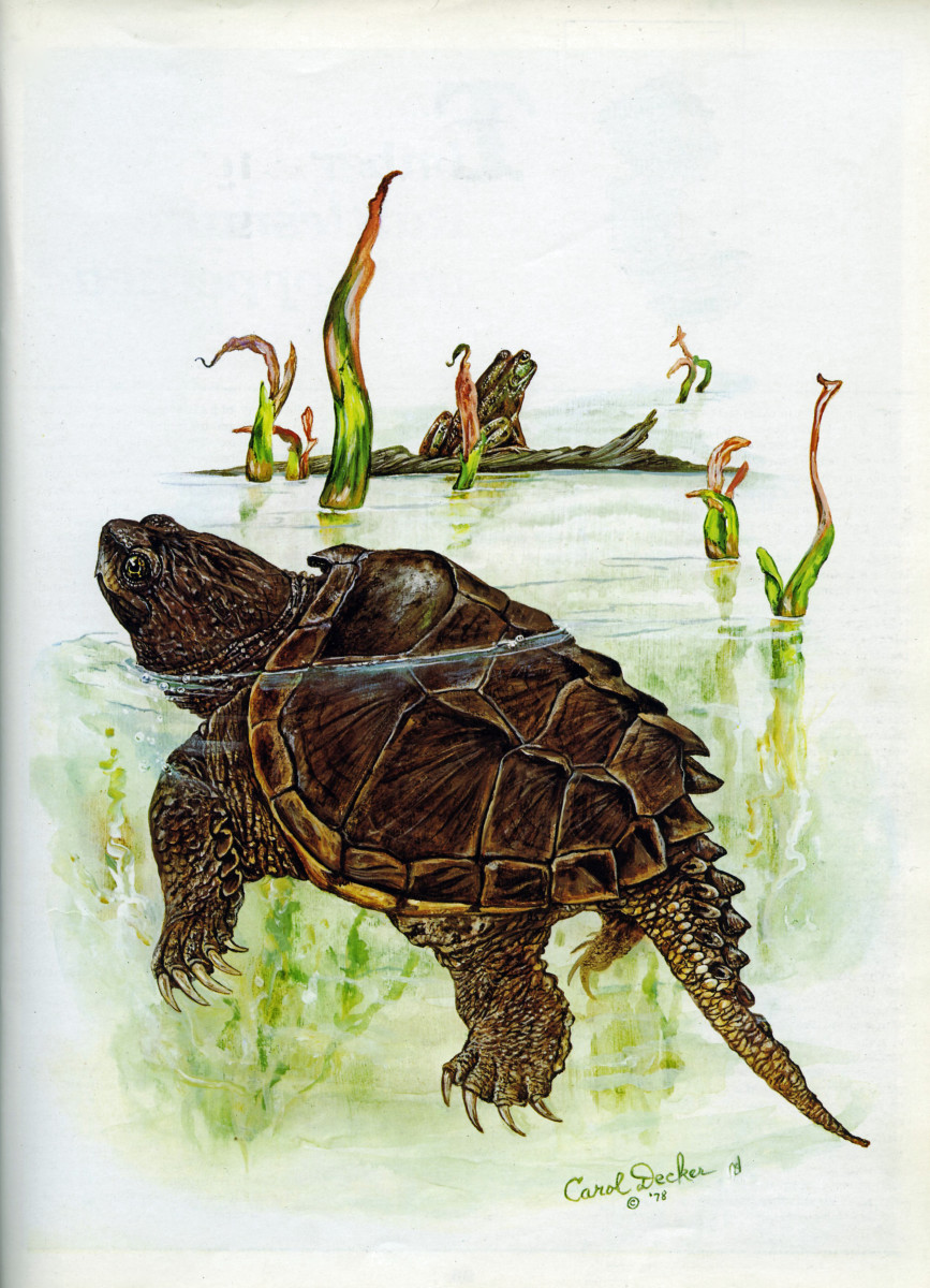 The Common Snapping Turtle: Don't Fix What Ain't Broke