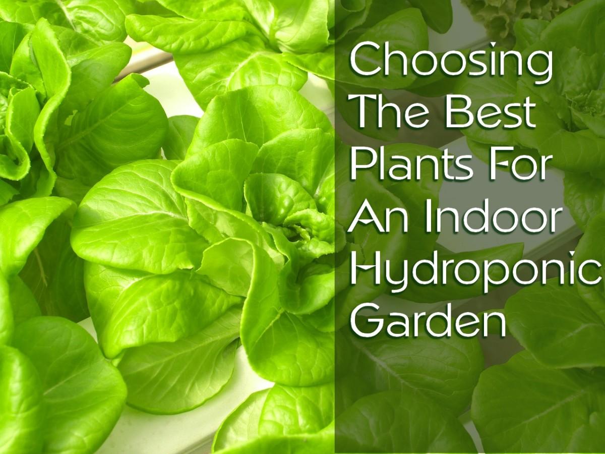 25 of the best plants for indoor hydroponic gardens dengarden - Great plants for indoors ...
