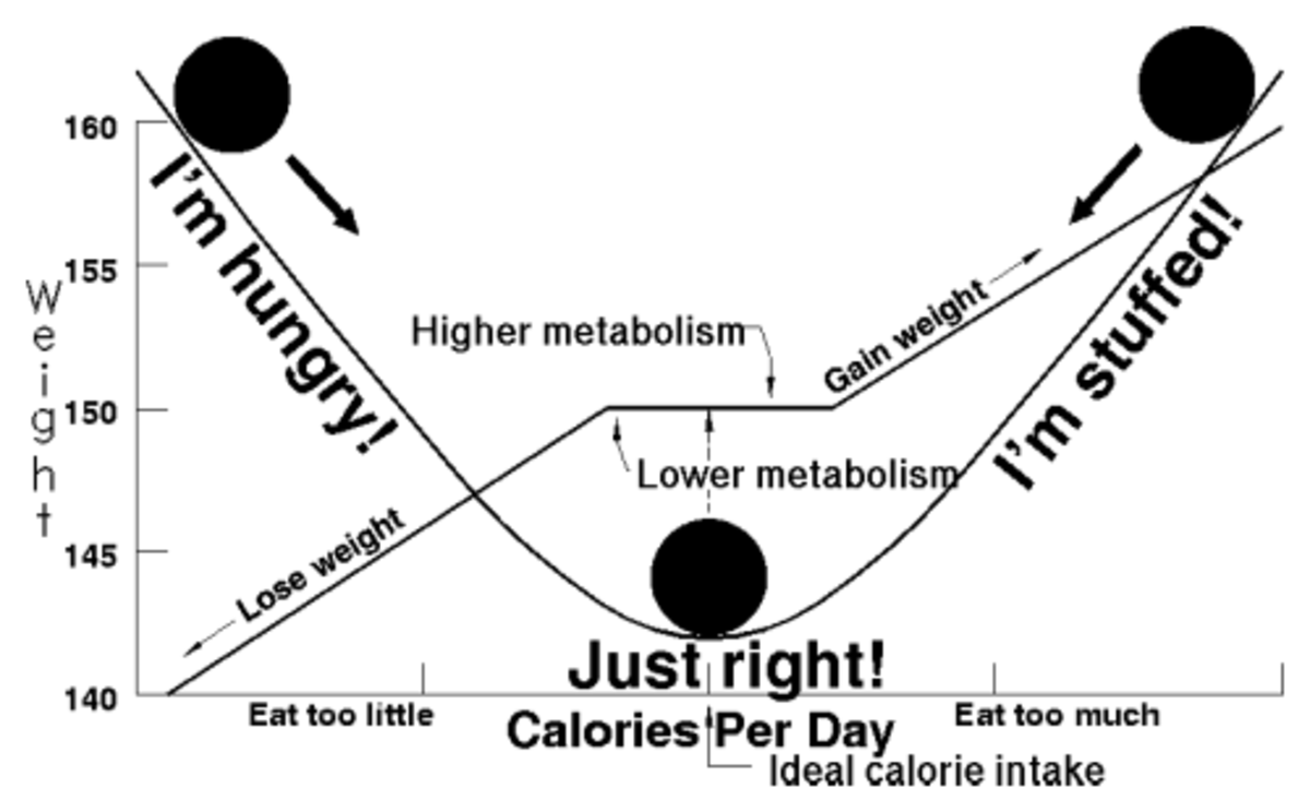 Energy balance is the relationship between energy in (food calories taken into the body through food and drink) and energy out (calories being used in the body for our daily energy requirements).