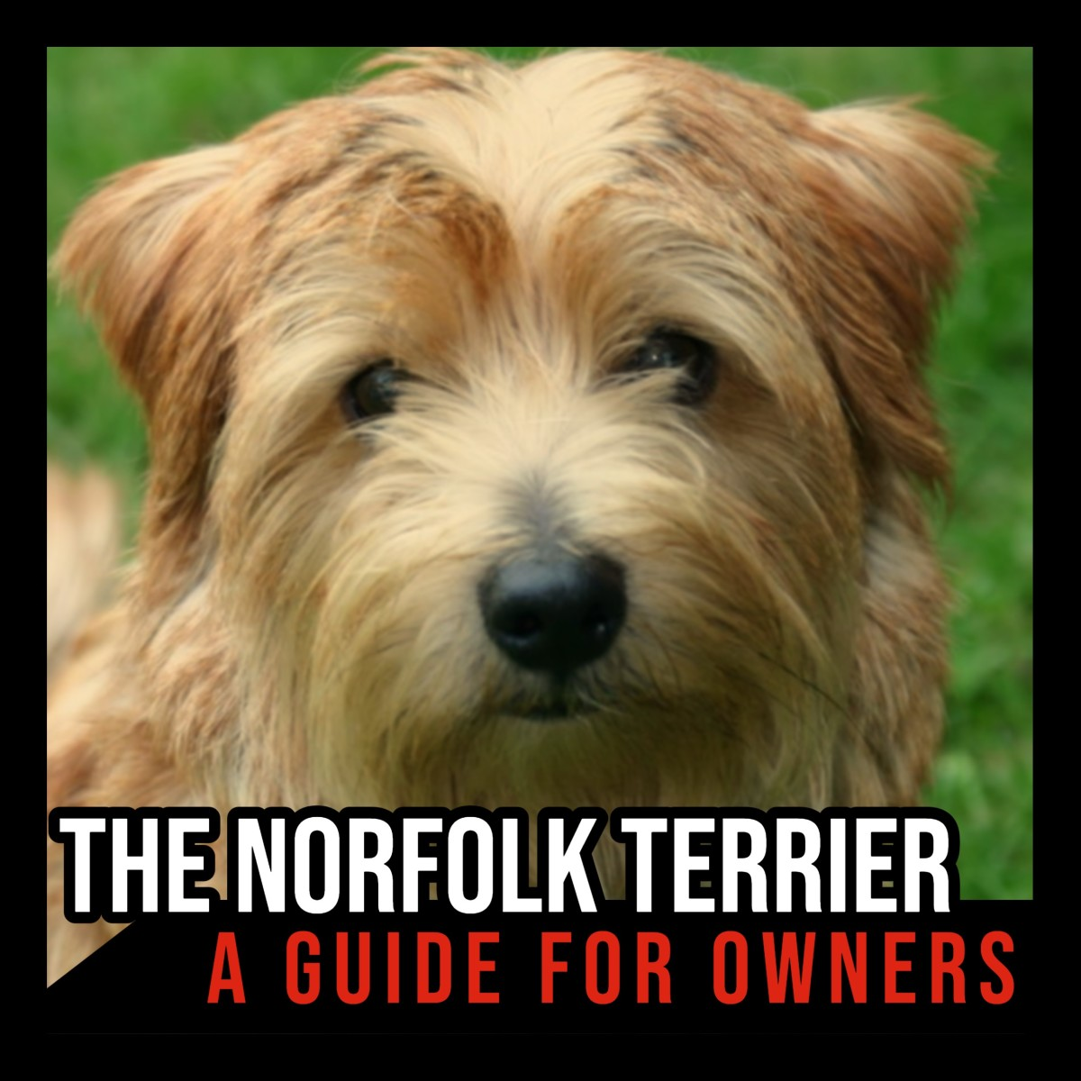 The Norfolk Terrier: A Guide for Owners.