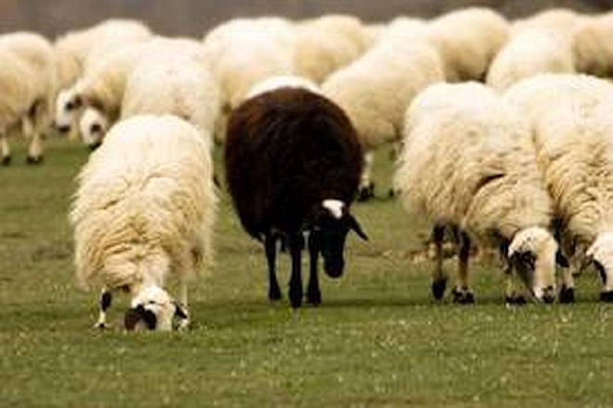 Why Being the Black Sheep in the Family Is a Good Thing