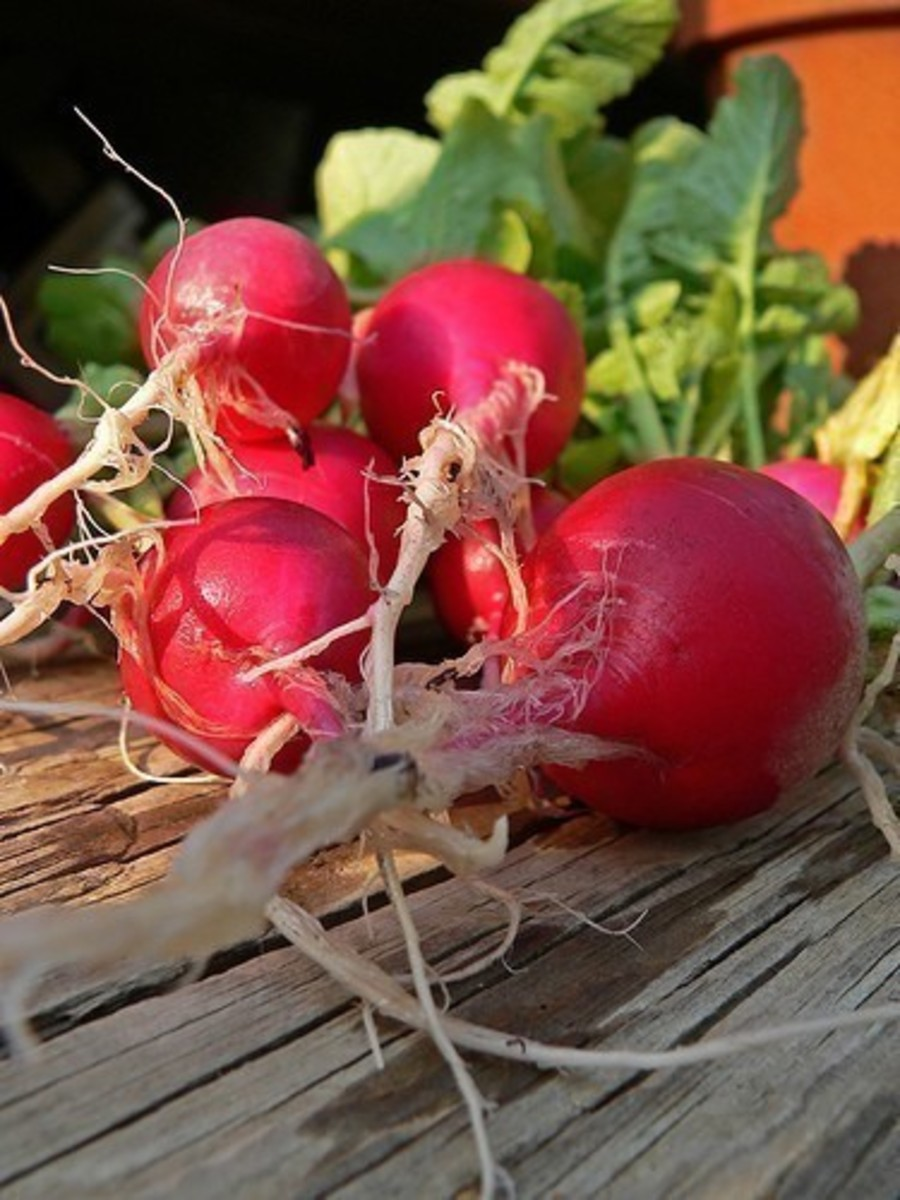 Fast-Growing Vegetables for Tabletop Gardens