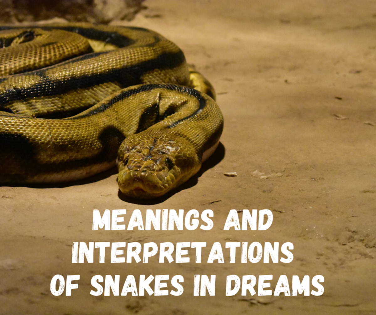 Read on to explore the different interpretations of snakes within a dream.