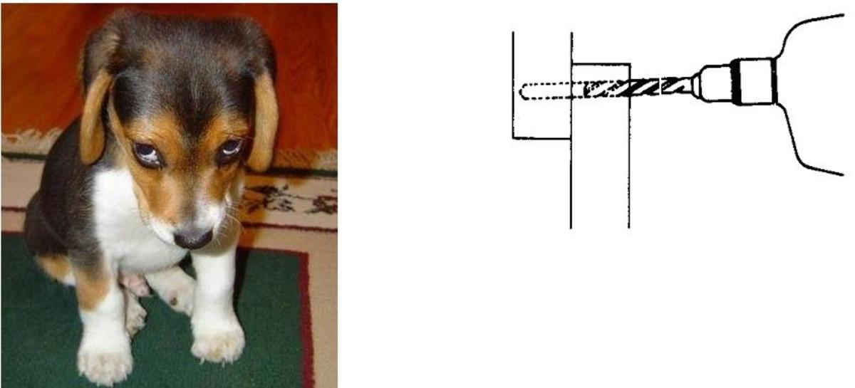 """(L) Most dogs offer some protection. (R) Installing a """"Nail Lock"""" in a window. The drill penetrates the inside sash and goes part way through the outer one."""