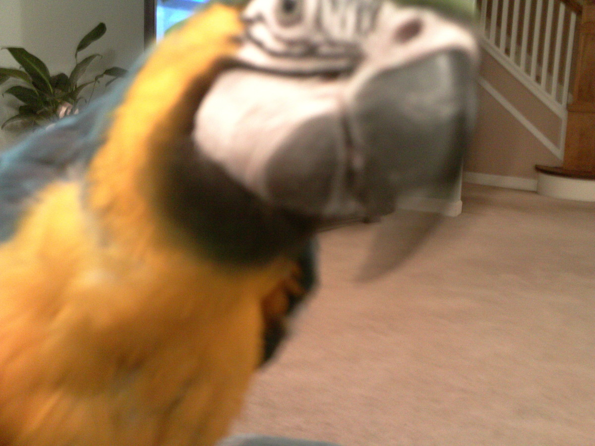 Training Your Macaw