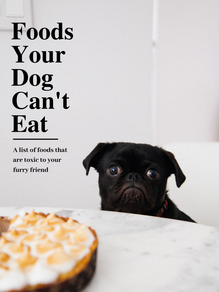 List of Toxic Human Foods Your Dog Cannot Eat
