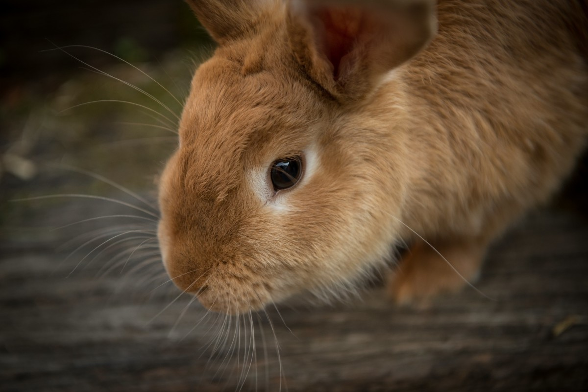14 Reasons Why Your Bunny Might Be Sick