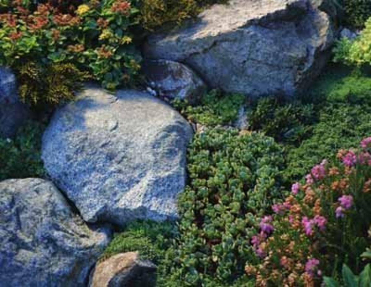 Rocks add visual appeal and function to anchor the soil. A variety of sedums offer textural variations.