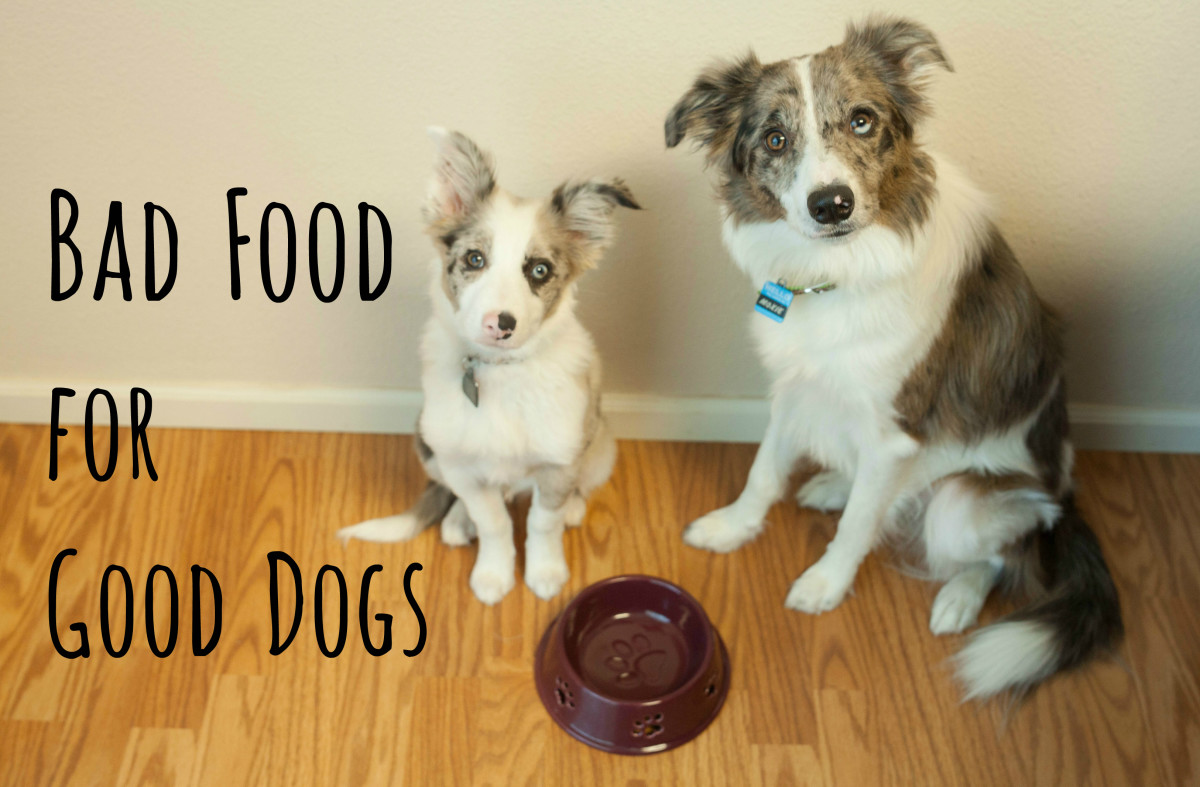 10 Common People Foods That Can Kill Your Dog