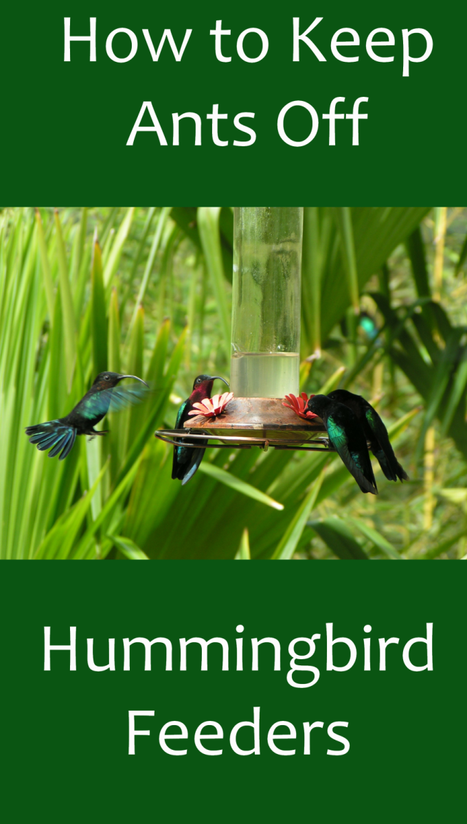 How to Prevent Ants on Hummingbird Feeders
