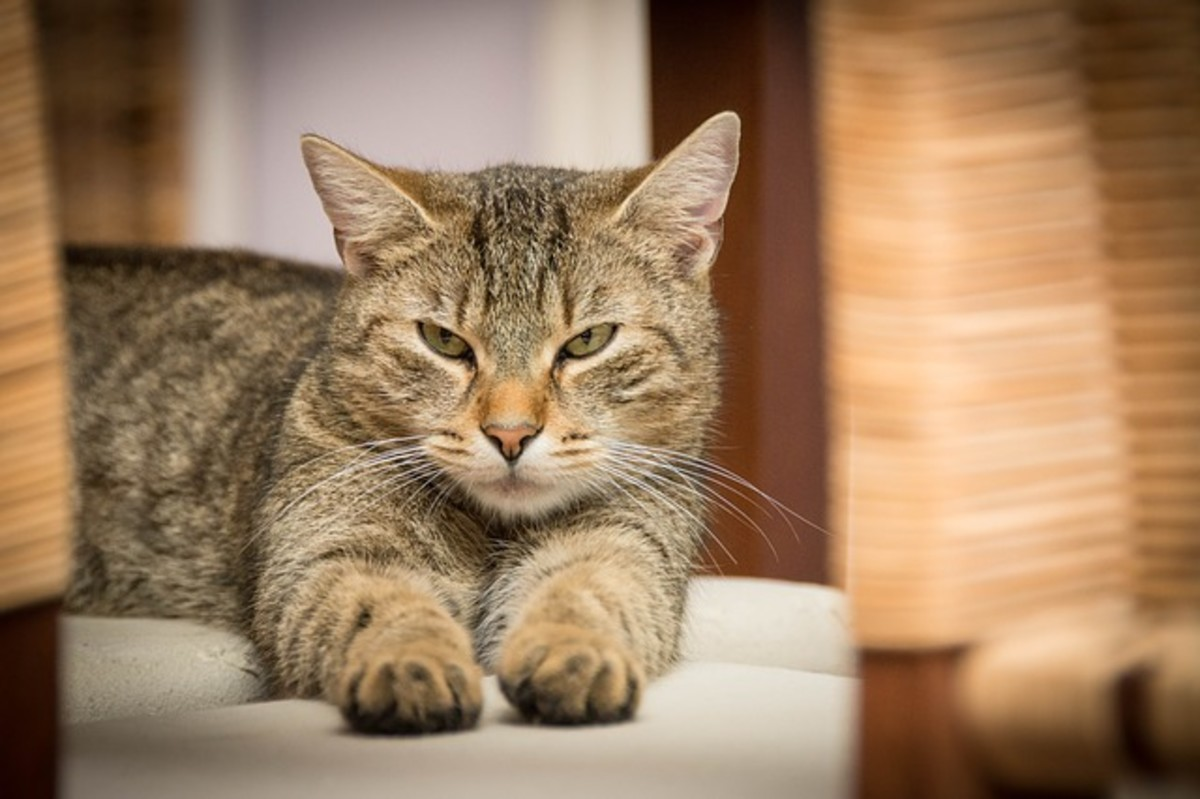 Guide: Cat Food Related Health Issues