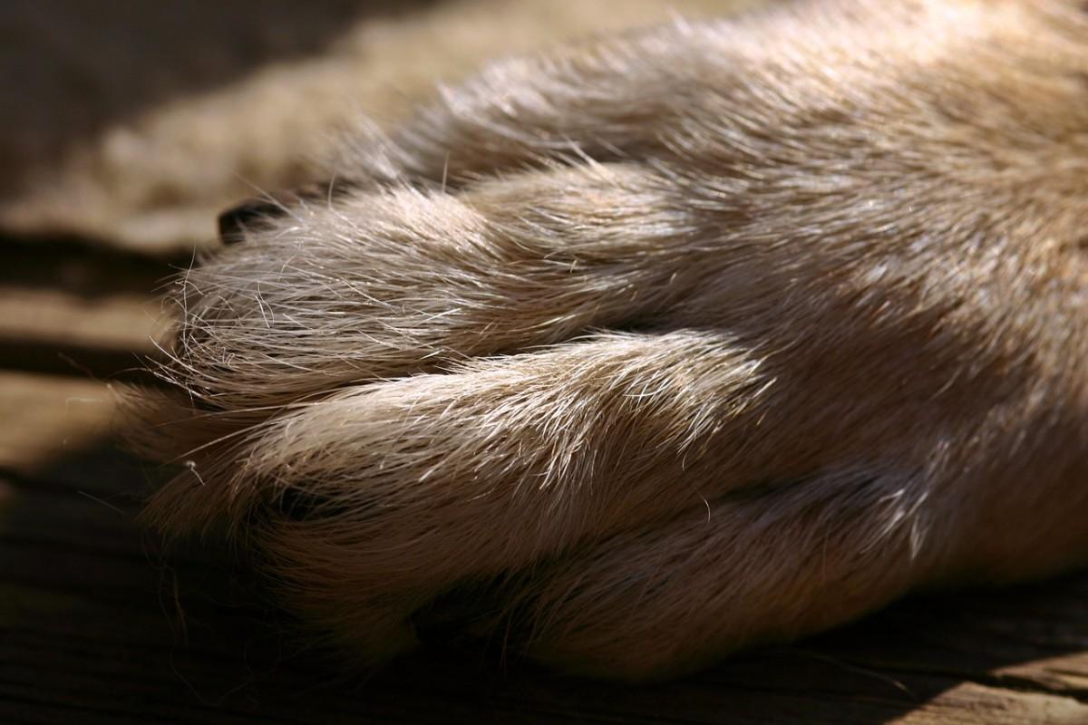 Tips For Trimming German Shepherd Nails Pethelpful
