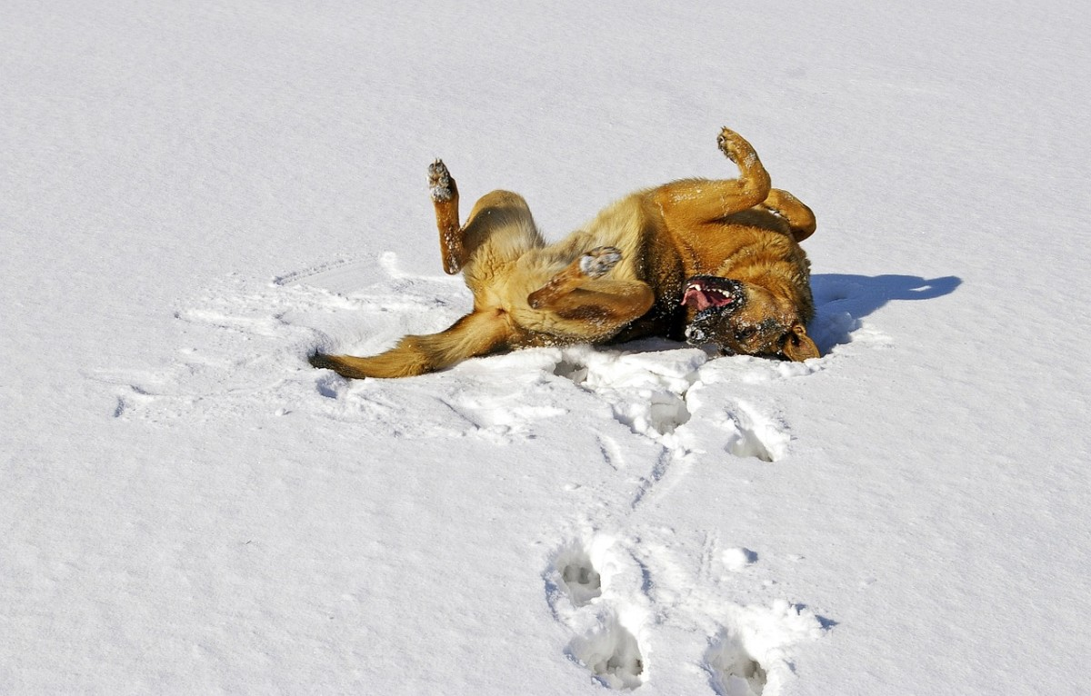 Get Your German Shepherd to Play With You