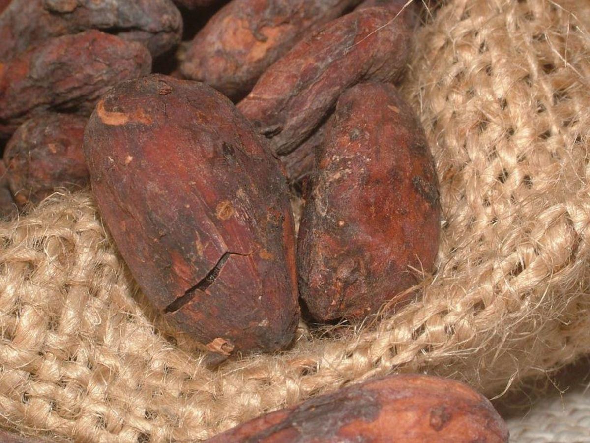 Wonderful Raw Cacao Health Benefits