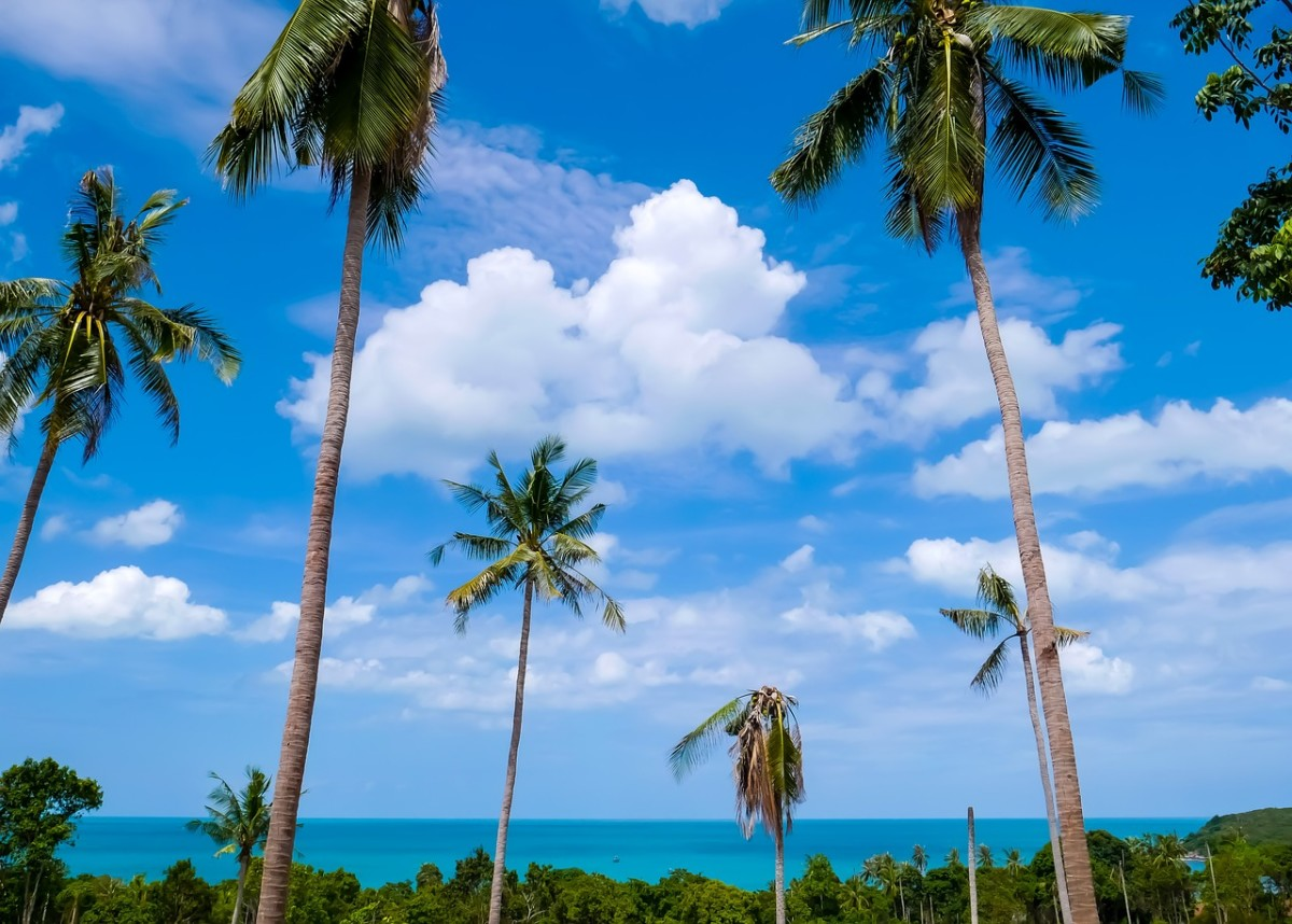 What to Do in Ko Samui, Thailand?