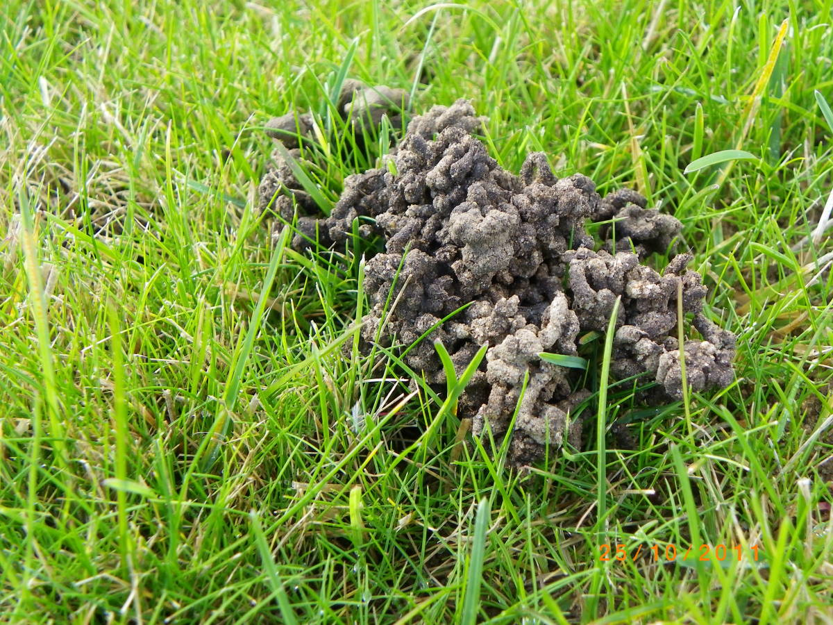 This is evidence of worm activity—generally a great sign for a gardener.