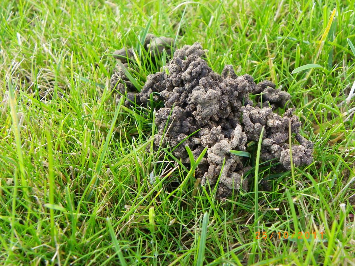 A  Gardener's Secret to Success: Worm Castings