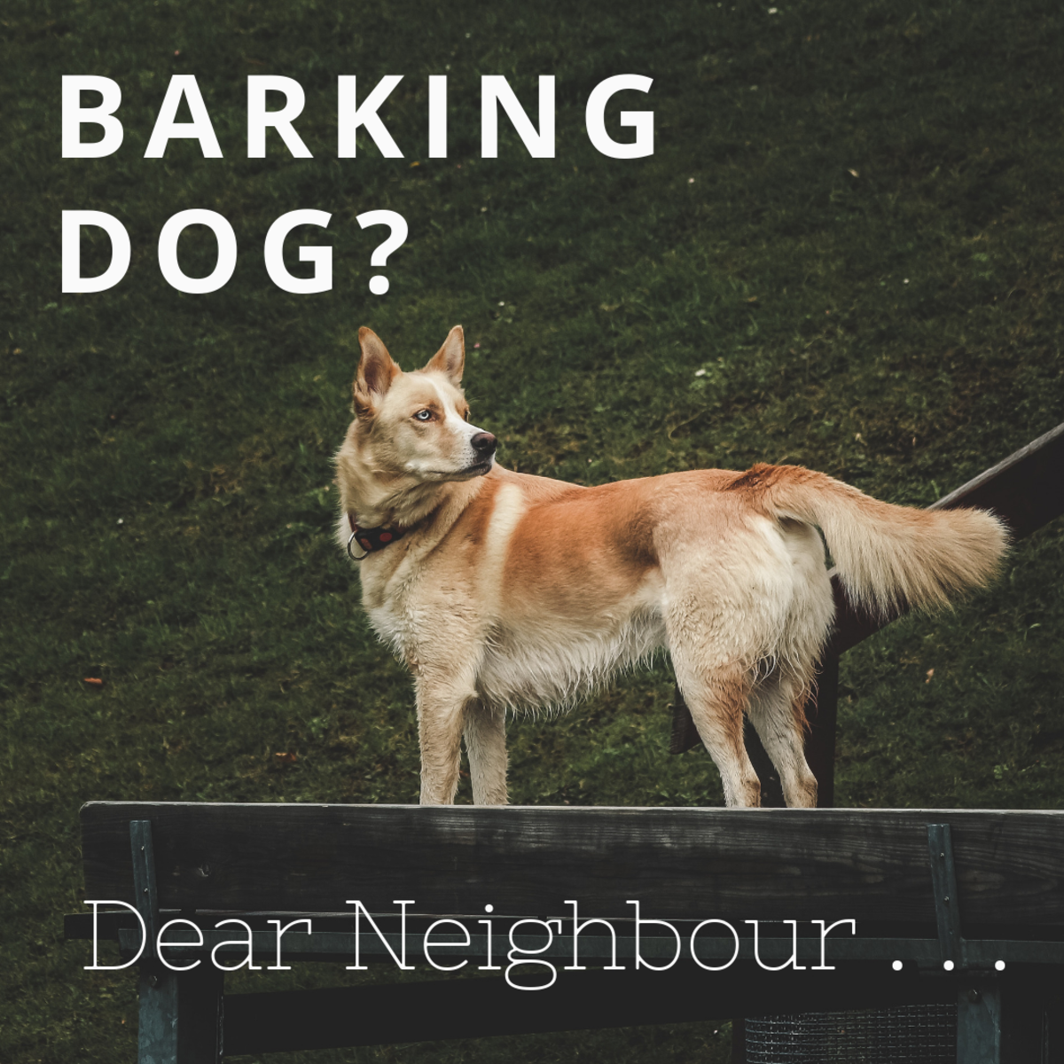 How to Write a Letter to Your Neighbour About Their Barking Dog