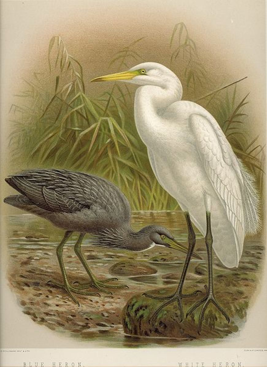 symbolism and themes in jewett s a white heron and hemingway big  source