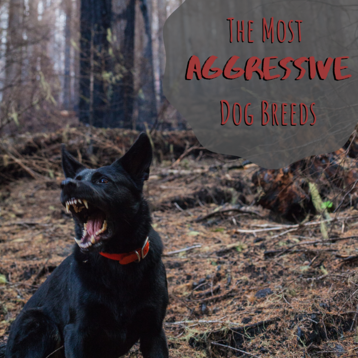 Statistically, some dog breeds have more reported instances of aggression than others.