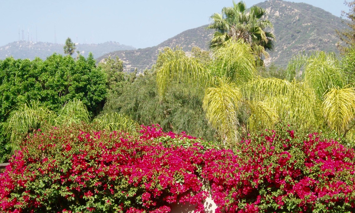 "Southern California's signature ""look"" includes bougainvillea, palm trees, California native trees, and mountains."