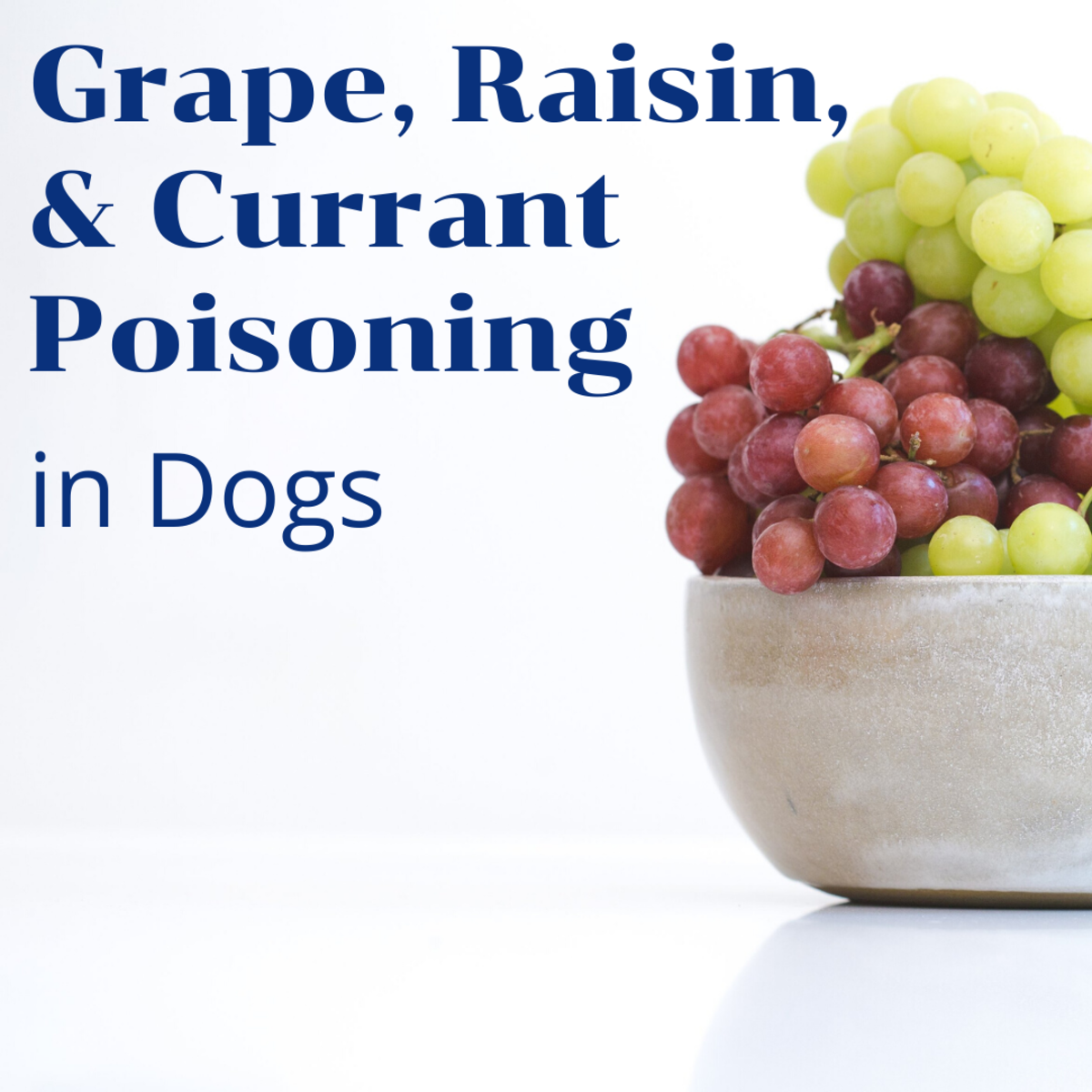 Symptoms and Signs of Kidney Failure After a Dog Eats Grapes