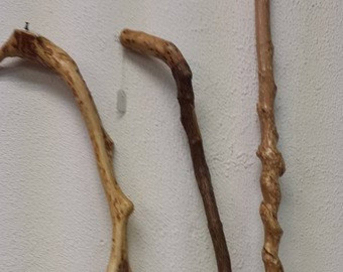 Choose your wooden blank for making your walking stick. Blackthorn is Ideal.